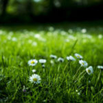 Grass with flowers