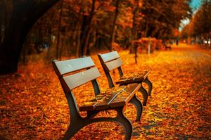 Empty benches in fall weather